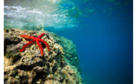 BillerudKorsnäs Joins Fight Against Ocean Litter