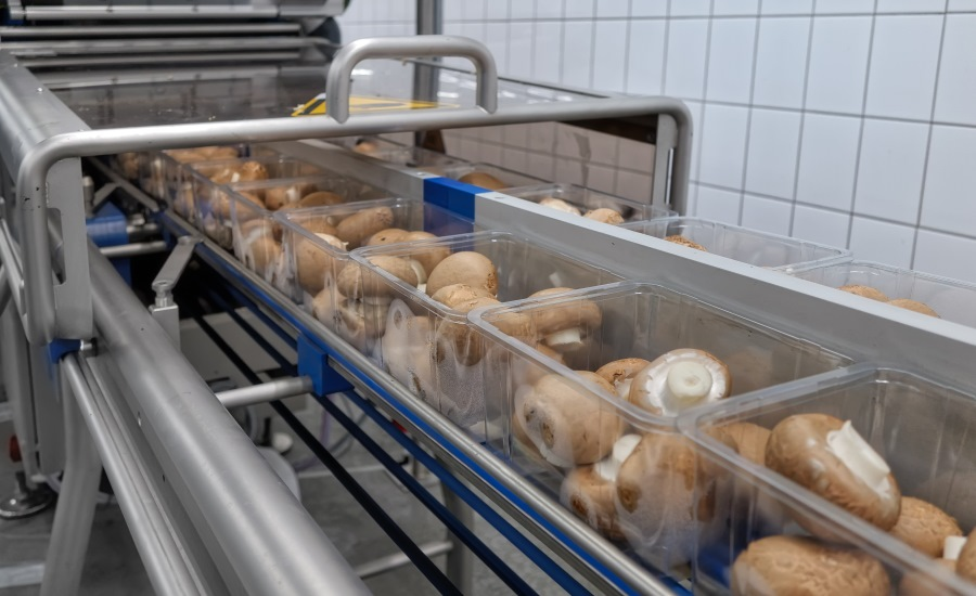 Mushroom Producer Switches to Tray Sealing