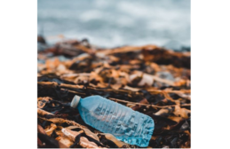 California Requires Plastic Beverage Containers to Contain 15% Recycled Plastic by 2022