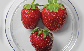 Fresh strawberries packaged in a silk fibroin coating