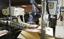 Cascina Italia S.p.A., automated egg handling