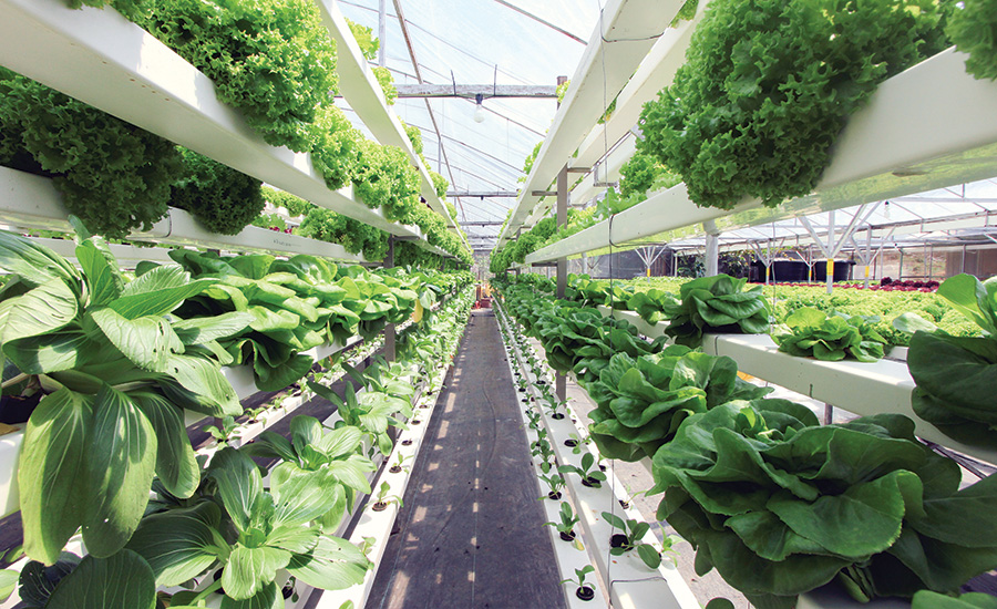 conveyors are used in vertical farming