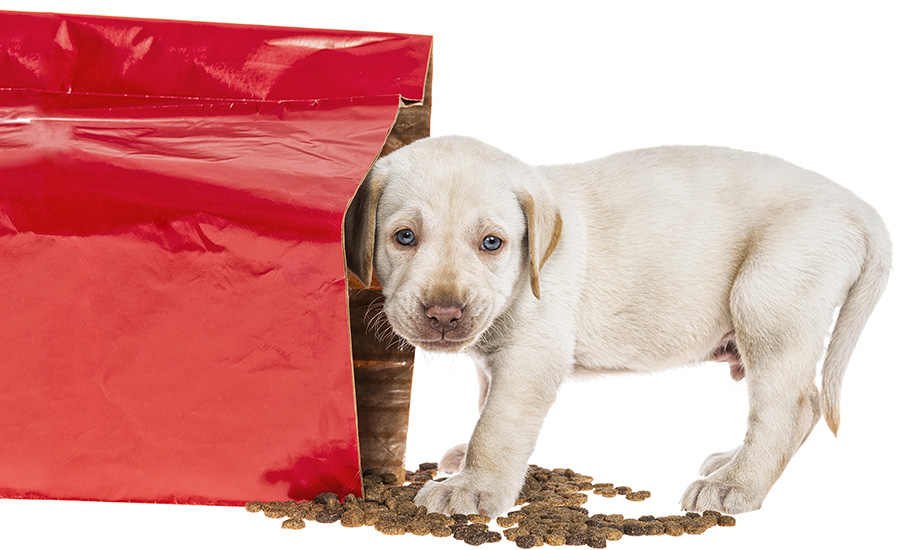Top Packaging Considerations for Premium Pet Food Brands